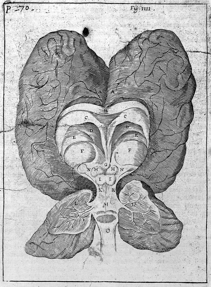 Altre scoperte anatomiche del Seicento