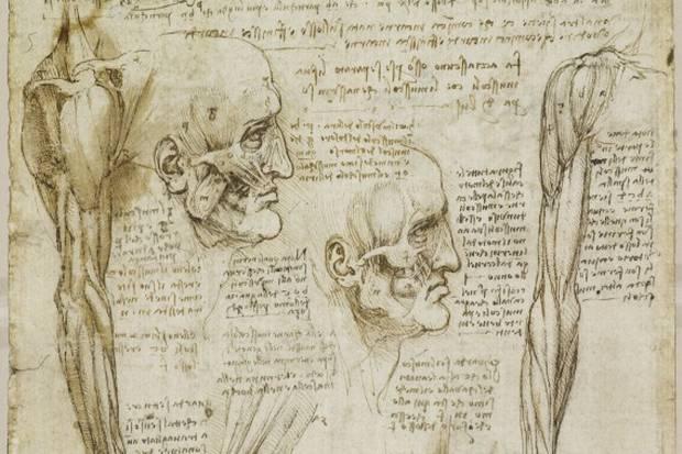Rinologia e Rinascimento