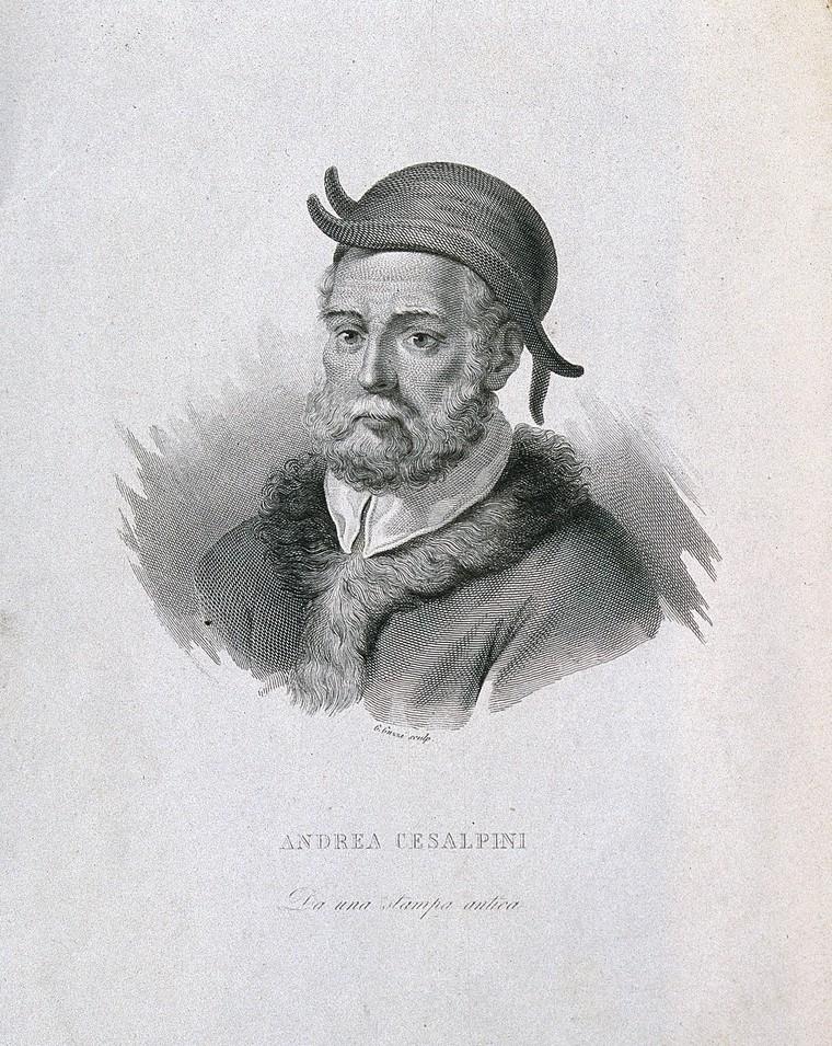 Cesalpino: il botanico che ha scoperto la circolazione
