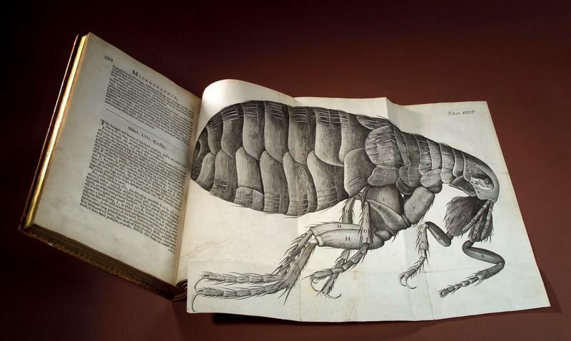 Robert Hooke e Lorenzo Bellini