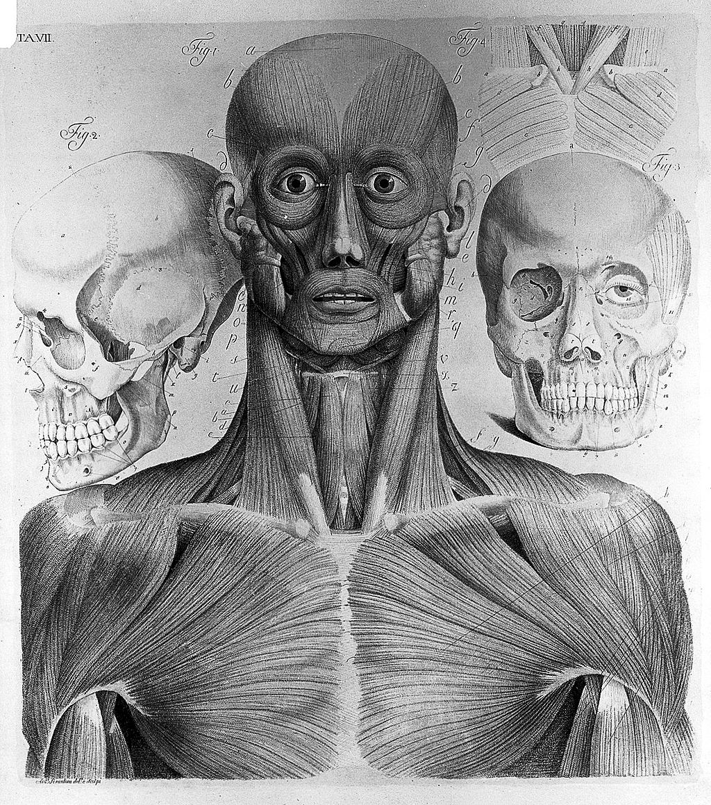 Gli anatomici italiani nel Settecento – prima parte